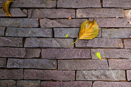 Stone Wall, Texture, Autumn, Leaf, Metope, Foliage