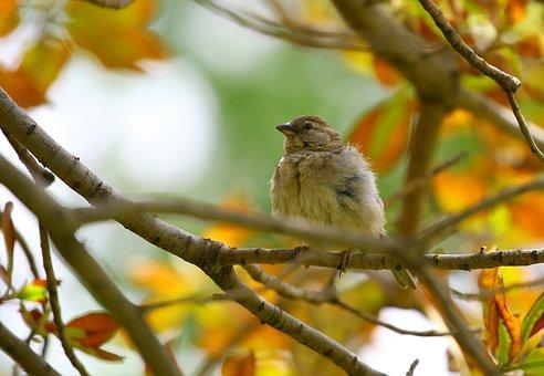 Animal, Animal Photography, Bird, Branch, Close-up