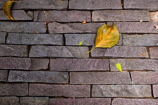 Stone Wall, Texture, Autumn, Leaf, Metope, Foliage