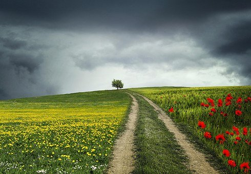 Tree, Night, Poppies, Flowers, Green, Landscape, Dark