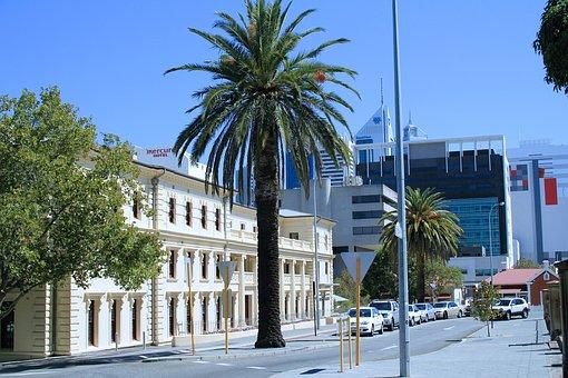 Palms, Street, Perth, Western Australia, Australia