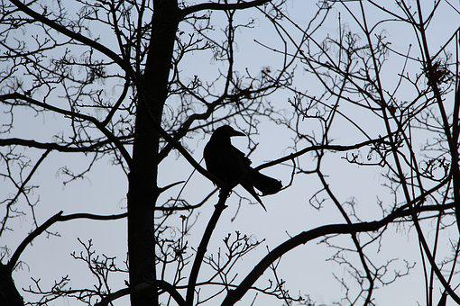 Bird, Branches, Contrast, Crow, Dark, Side View