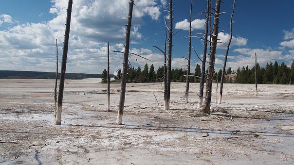 Yellowstone, National, Park, Wy, Travel, Wyoming