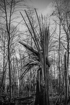 Tree Damage, Tree, Forward, Overturned, Devastation