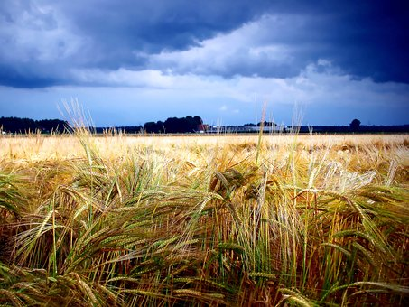 Grain, Hurricane, Threat, Thunder Cloud, Zomerbui