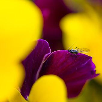 Fly, Spring, Plant, Insect, Beetle, Flower