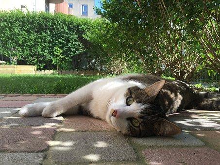 Cat Lying, Domestic Animal, Cat Eyes, Feline, Lounge