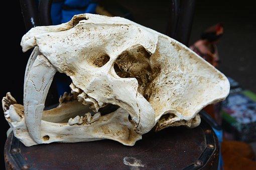 Skull, Skeleton, Head, Cranium, Fear, Spooky, Danger