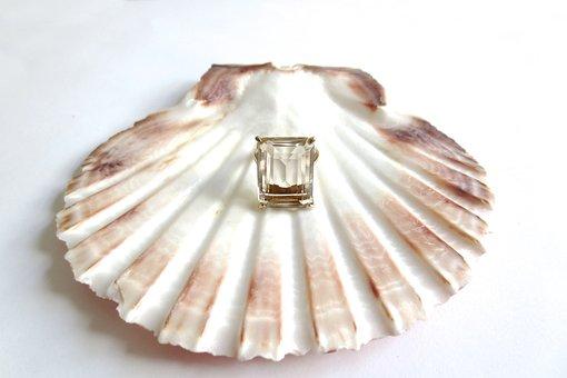 Vintage, Scallop, Shell, Sea, Beach, Holiday, Vacation