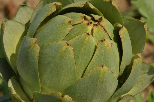 Artichoke, Vegetable, Sheet, Petal, Agricultural