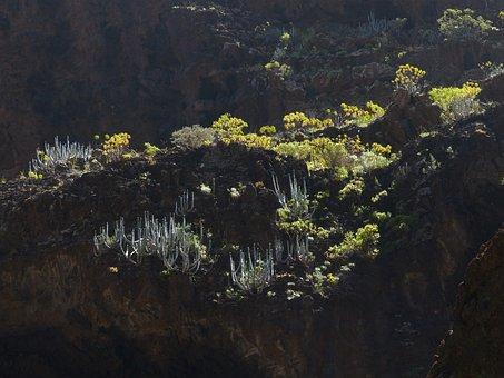 Spurge, Spurge Family, Euphorbia Atropurpurea