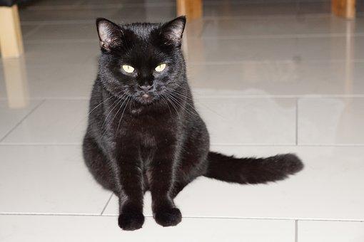 Cat, Black, Sit, Animal, Pet, Full, Barsik, Fur, Velvet
