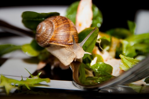 Snail, Salad, Fork, Meal, Healthy, Animals, Plate, Dine