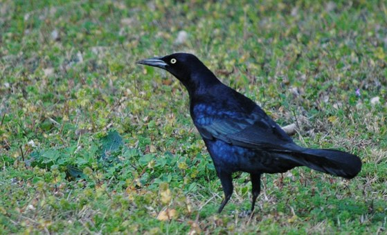 Bird, Black, Silhouette, Nature, White, Animal, Design