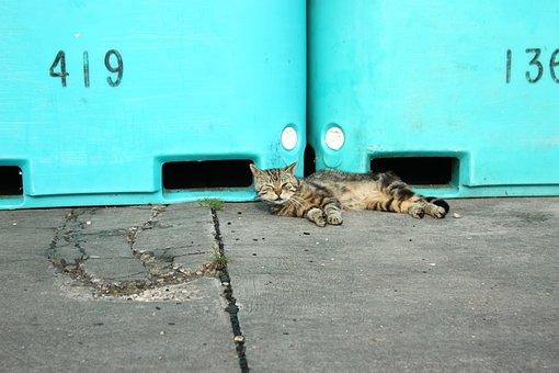 Cat, Domestic Cat, Lie, Sleep, Holiday, Kitten, Tomcat
