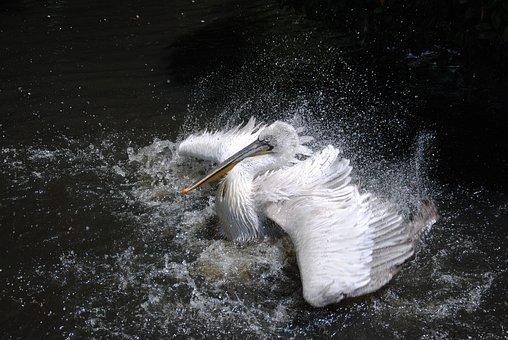 Bird, Sea, Shake, Water, Drops, Beach, Nature, Wildlife