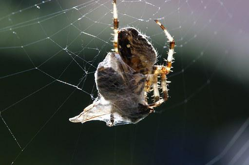 Spider, Web, Bee, Wild Nature, Death, Eat, Kamp, Caught