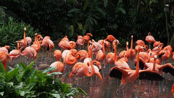 Flamingo, Park, Birds, Singapore, Pink