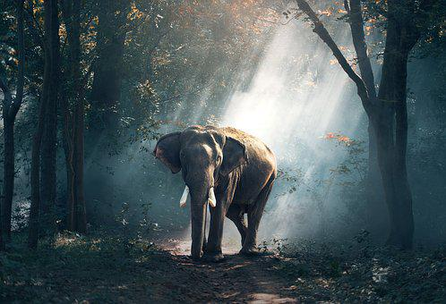 Elephant, Animals, Asia, Large, Bright, Close