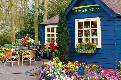 Arrangement, Beautiful, Blooming, Bulb, Bulbs, Color