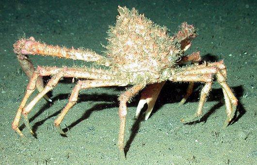Sea, Ocean, Water, Underwater, Sea Floor, Sea Life