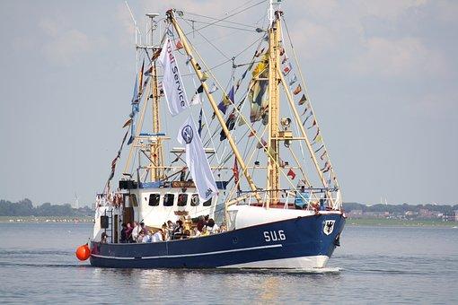 Shrimp, Port, Cutter, North Sea, Harbour Festival
