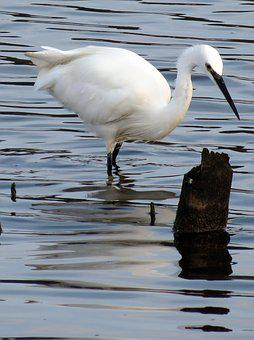 Wildlife, Nature, Bird, Feathers, Water, Estuary