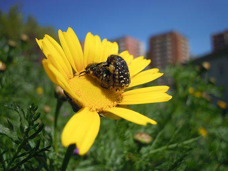Flower, Insects, Nature, Flowers, Spring, Bichito