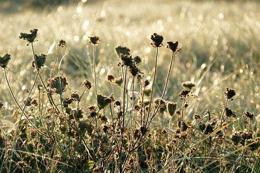 Plants, Contre Jour, Nature, Green, Landscape, Outdoor