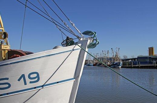 Shrimp, Cutter, Port, Husum, North Sea
