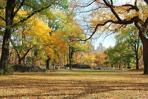 Trees, Central Park, Manhattan, New York, Fall, Beauty