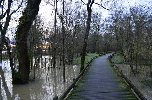 Edges Of Garonne, Wetlands, Pontoon, Swamp, Nature