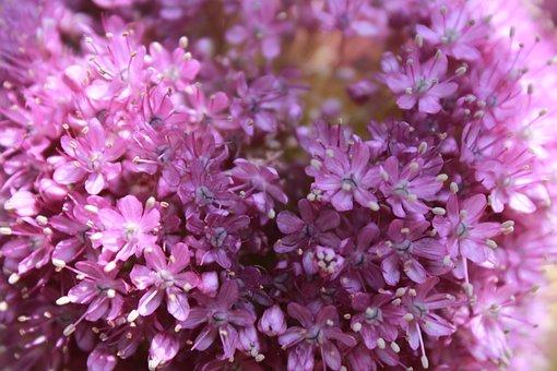 Flowers, Nature, Pink Flower, Plants, Tabitha