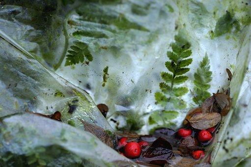 Leaves, Red Berries, Dead Leaves, Winter, Plastic