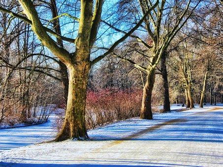 Park, Winter, Away, Tiergarten, Berlin, Snow, Trees