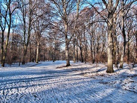 Park, Winter, Tiergarten, Berlin, Snow, Trees, Wintry