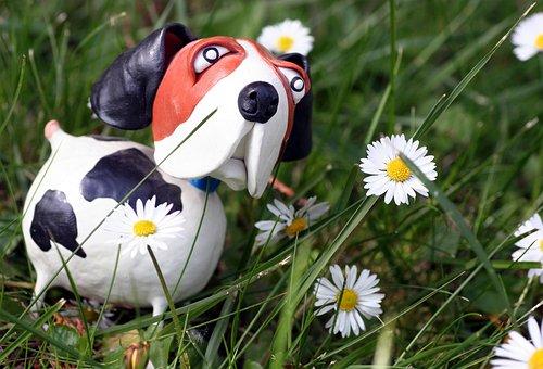 Grass, Daisies, Dog, Spring, Garden, Sun