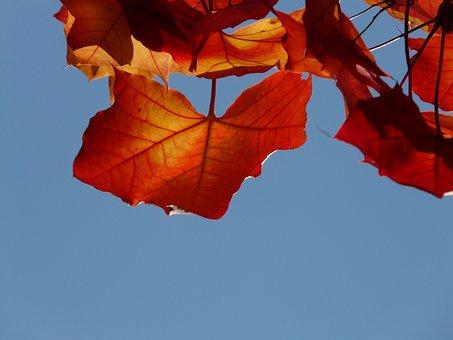 Maple, Bright Red, Red, Orange, Yellow, Yellow Orange