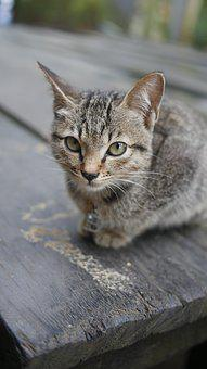 Cat, Kitten, Animals, Pet, Feline, Cute, Animal, Grey