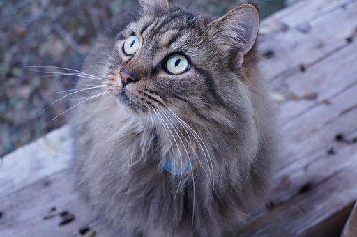 Cat, Wood, Animal, Pet, Cute, Feline, Mammal, Domestic