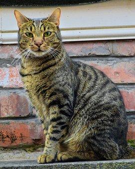 Cat, Feline, Mammal, Animal, Pet, Domestic