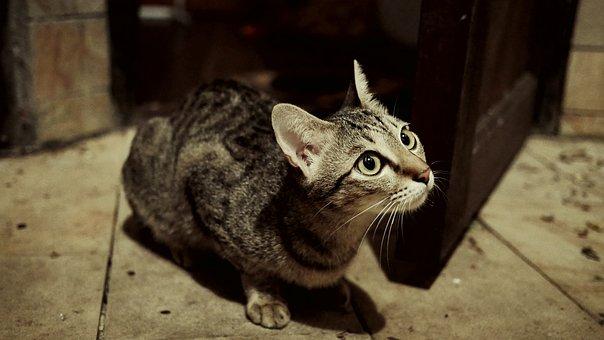 Cat, Pussy, Domestic Animal, Feline, Grey, Pet, Animal