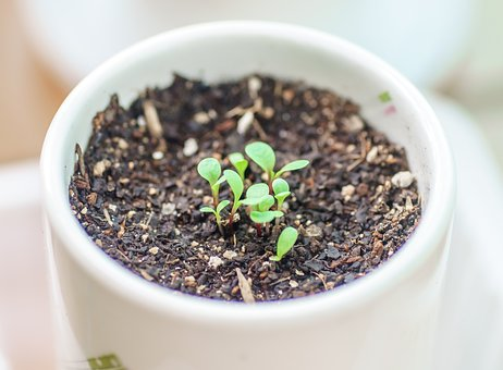 Plants, Potted Plant, Veranda, Little Thing, Little