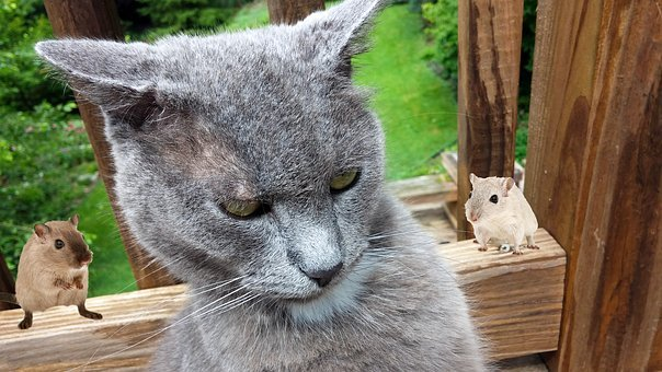 Cat, Mice, Funny, Defeated, Annoyed, Angry, Mood