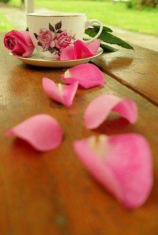 Teacup, Rose, Blossom, Bloom, Quiet, Teatime, Tee