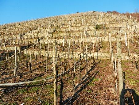 Vineyard, Neckar, Sunny, March, Vegetation Calm
