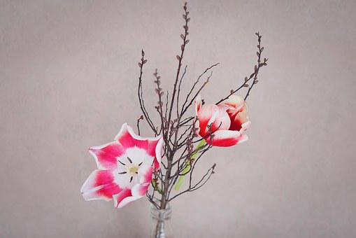 Tulips, Flower, Flowers, Pink, White, Branch, Twig