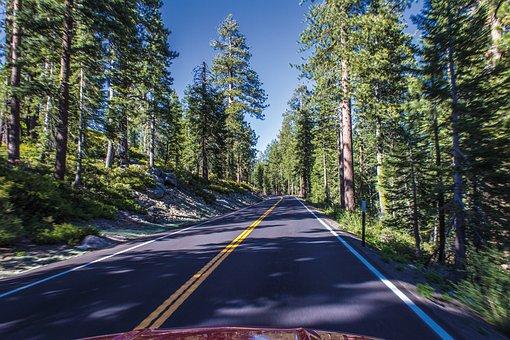 Road, Drive, Asphalt, Forest, Trees, Tioga Pass