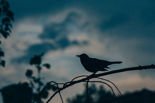 Animal, Bird, Dark, Nature, Silhouette