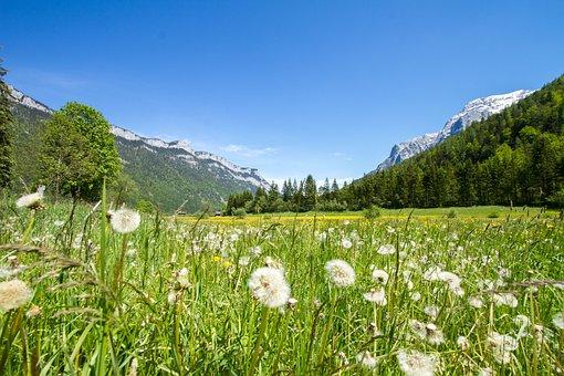 Meadow, Grass, Idyll, Dandelion, Relax, Landscape
